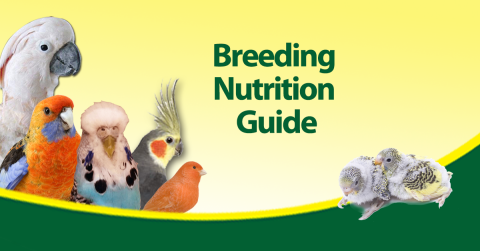 bird-breeding-nutrition-guide.png