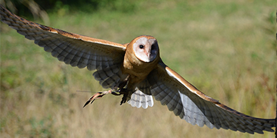owl-in-flight-catagorie-header.png