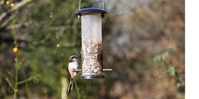 wild-birds-long-tailed-tit-catagorie-header.png